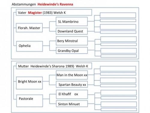 Stammbaum Heidewinde's Ravenna